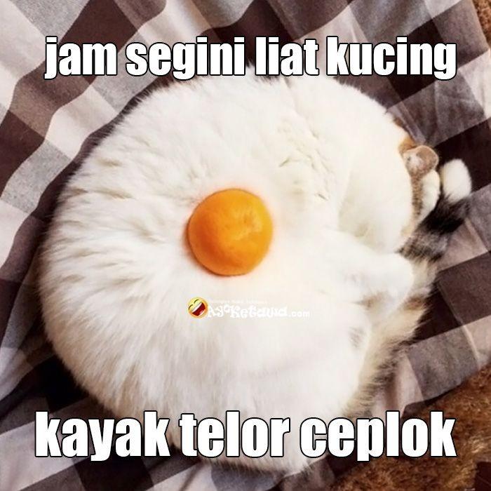 Wah sudah masuk jam-jam lapar nih. Tapi jangan sampai halu ya, ini kucing lagi tidur lho bukan telur ceplok. Foto: Istimewa