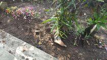 Temuan Mayat dengan Kaki Nongol di Permukaan yang Gegerkan Kediri