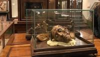 Museum ini bernama La Specola. Museum in bagian dari Museum of Natural History ini sudah ada sejak tahun 1775 dan masih terawat dengan baik hingga kini. (tanao0313/Instagram)