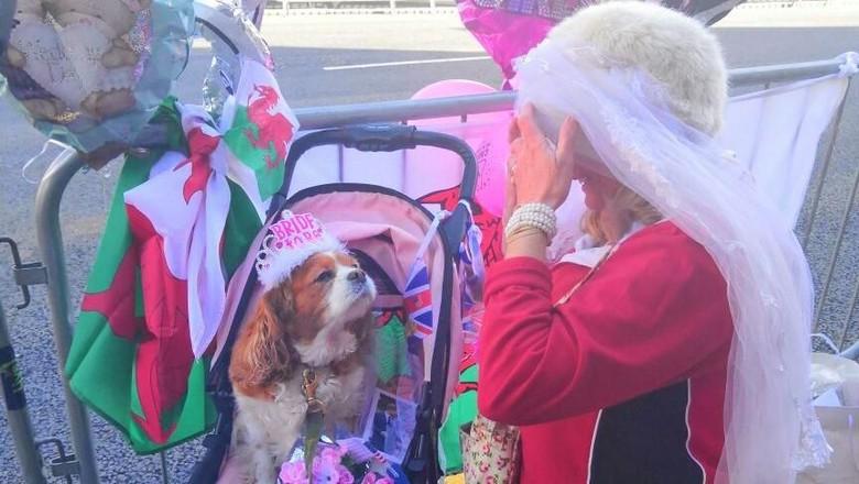 Gemas! Anjing Ini Ikut Nonton Pernikahan Pangeran Harry-Meghan