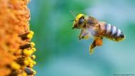 Waduh! 5 Buah Ini Akan Punah Kalau Tak Ada Lebah