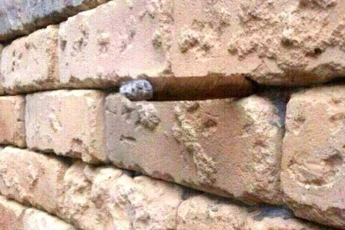 Bisakah kamu menemukan sebatang rokok? (Foto: Internet)