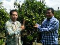 Bantu Petani Ekspor, Kementan Siapkan 1 Juta Bibit Jeruk