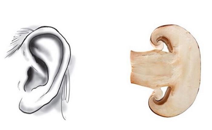 Bentuk jamur mirip dengan bentuk daun telinga manusia. (Foto: Instagram)