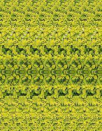 Sering 'Menjulingkan' Mata untuk Lihat Gambar 3D? Awas Juling Beneran