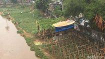 Deg-degan Menanam Timun Suri di Banjir Kanal Barat