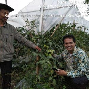 Pakai Teknologi Ini, Petani Cabai Tak Perlu Khawatir Saat Hujan