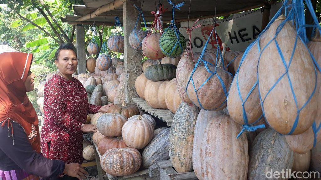 Agenda Ngabuburit di Ngawi: Berburu Waluh Majasem