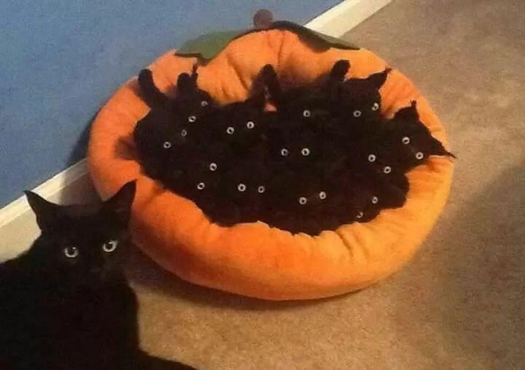 Ada berapa kucing yang asli? Foto: Sohu