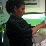 Gandeng Polisi, KKP Gagalkan Penyelundupan Benih Lobster Rp 150 M