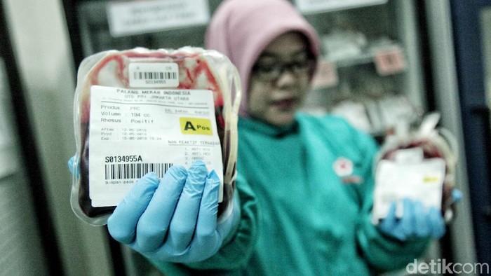 Ilustrasi stok darah aman untuk kasus DBD. Foto: Pradita Utama