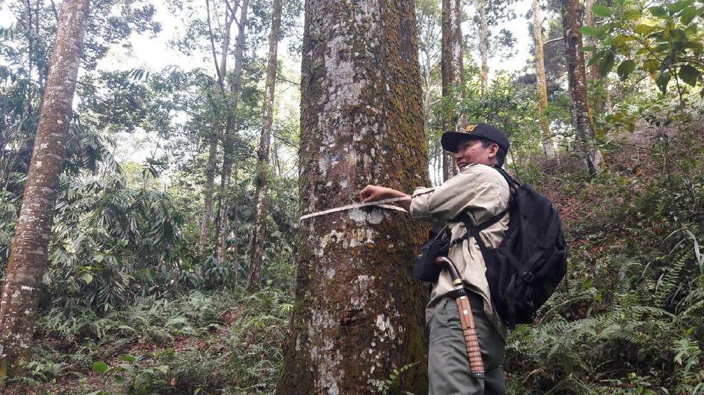 Mengunjungi Hutan Meranti di Gunung Dawu Bogor
