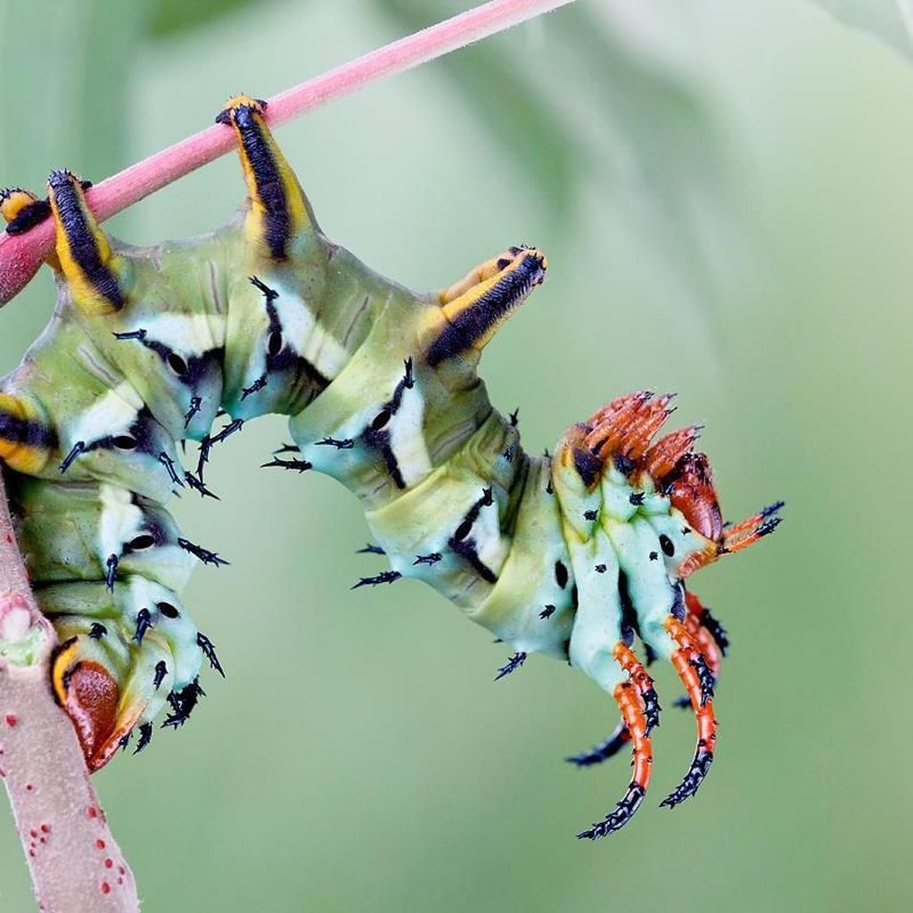 Memukau Tapi Bikin Bergidik, Foto Makro Ulat di Habitat Asli