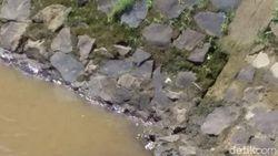 Polisi Telusuri Asal Buaya yang Nongol di Sungai Baleendah
