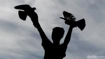 Puluhan Burung Langka Dilepasliarkan di Gunung Sahuwai Maluku