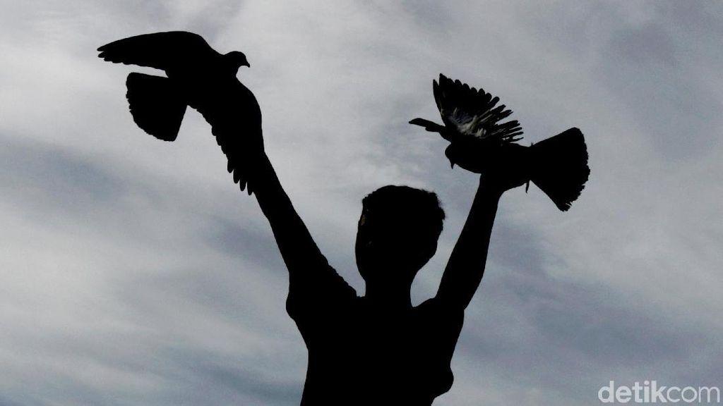 Serunya Ngabuburit Sambil Melatih Burung Dara