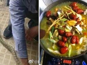 Hiii, Mahasiswa Ini Masak dan Makan Ular yang Masuk ke Asramanya