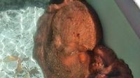 Pria Ini Lepaskan Gurita Seberat 31 Kilogram dari Pasar Ikan Agar Tak Diolah Jadi Makanan