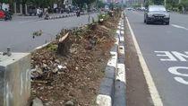 Demi Tol, Seribu Pohon di Jalan Protokol Makassar Ditebang