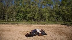 Pawang kuda di Spanyol memanfaatkan hewan ternaknya untuk membantu pasien melepas stres. Lewat interaksi dengan kuda pasien dibantu untuk mengenali pikirannya.