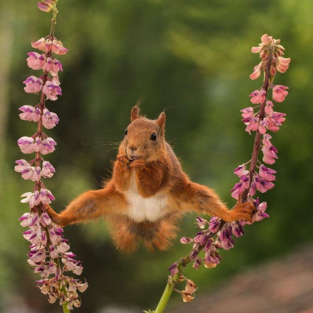 Aksi akrobatik tupai. Karya Geert Weggen. Foto: instagram.com/comedywildlifephoto
