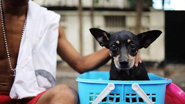 Diduga anjing tersebut dibuang pemiliknya dan terjebak di kali tersebut selama 3 hari