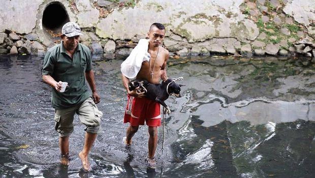 Setelah dievakuasi, anjing itu langsung dibawa relawan