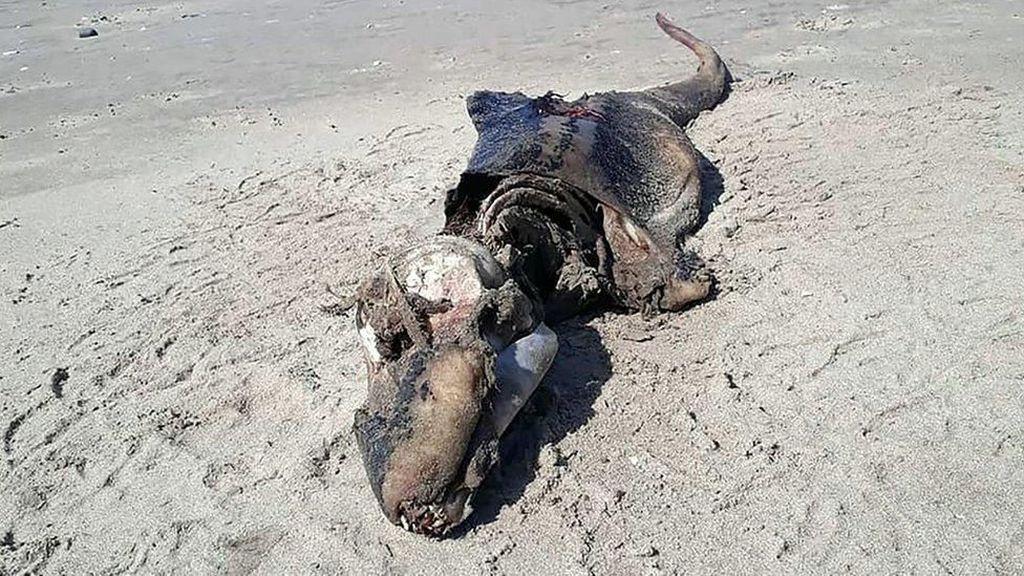 Makhluk Misterius Terdampar di Pantai Wales