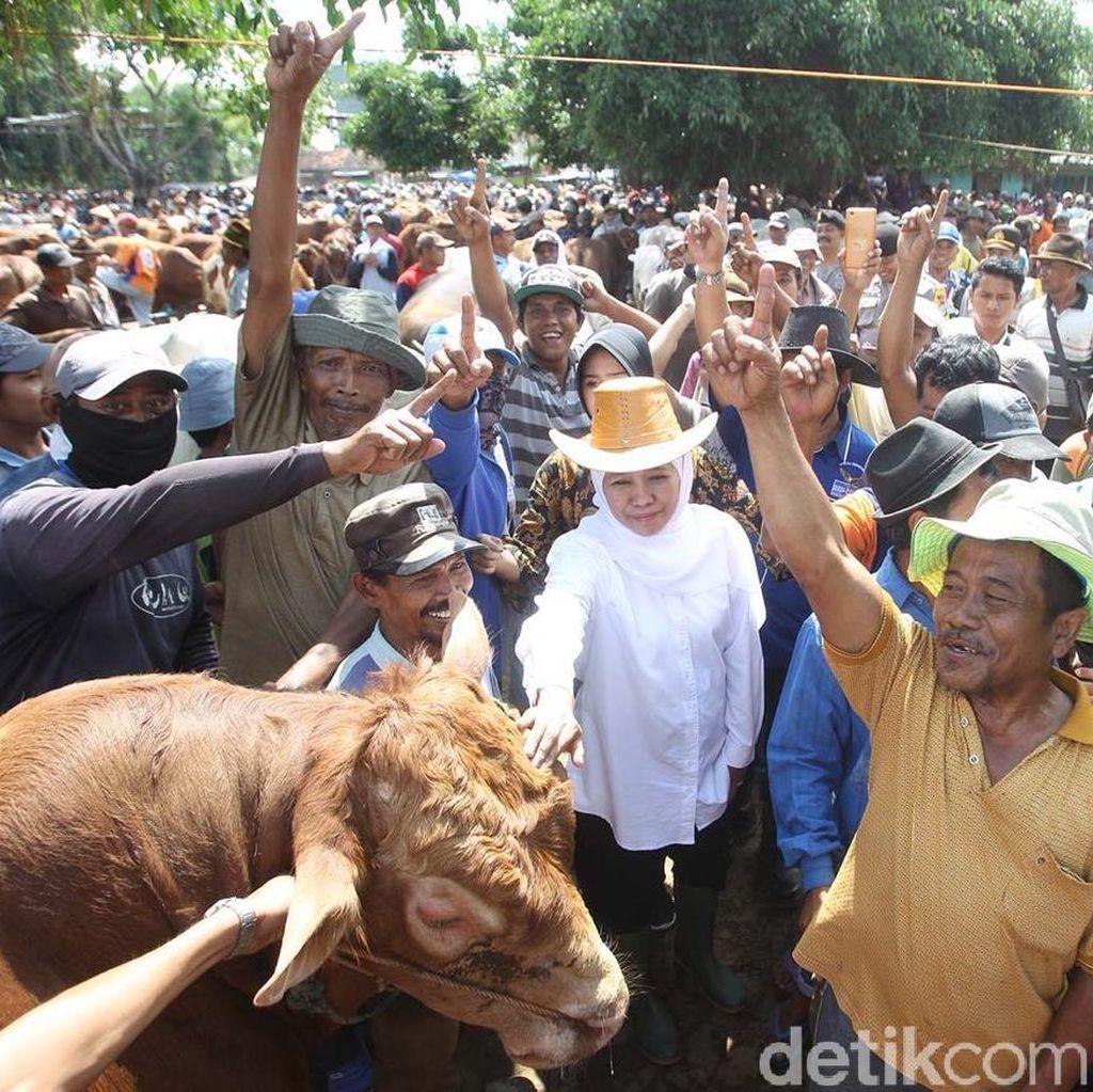 Kunjungi Tuban, Khofifah Disambut Pedagang Sapi