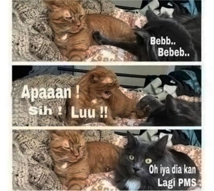 Orang yang menstruasi bisa mendadak jadi emosian, hii kucing jantan aja jadi enggak berani dekat-dekat sama pacarnya. (Foto: Internet)