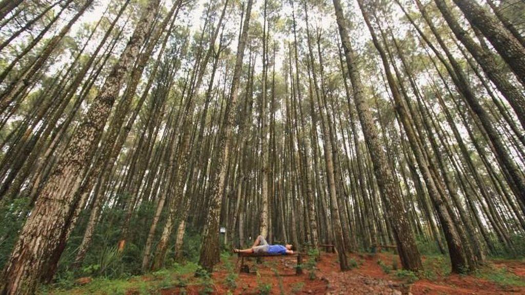Sejuknya Pagi di Hutan Pinus Asri Bantul Saat Libur Waisak