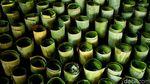 Melihat Lebih Dekat Proses Pembuatan Lemang di Senen