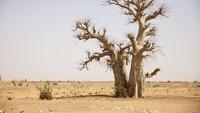 Perubahan Iklim Jadi Ancaman Dunia, Bank BUMN Bisa Apa?