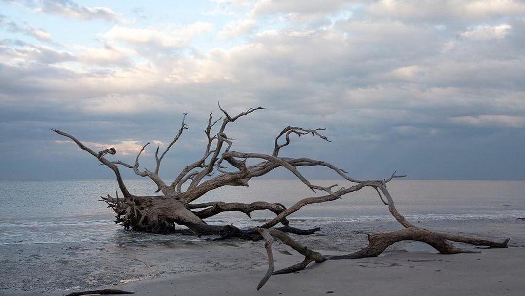 Instagramble! Pantai Berisi Pepohonan Gundul