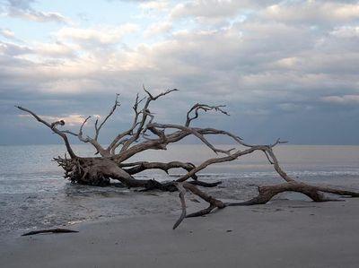 Foto: Pantai Instagramable yang Dihiasi Pepohonan Gundul