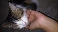 Sayembara! Gadis Makassar Siapkan Rp 2 Juta untuk Penemu Kucingnya