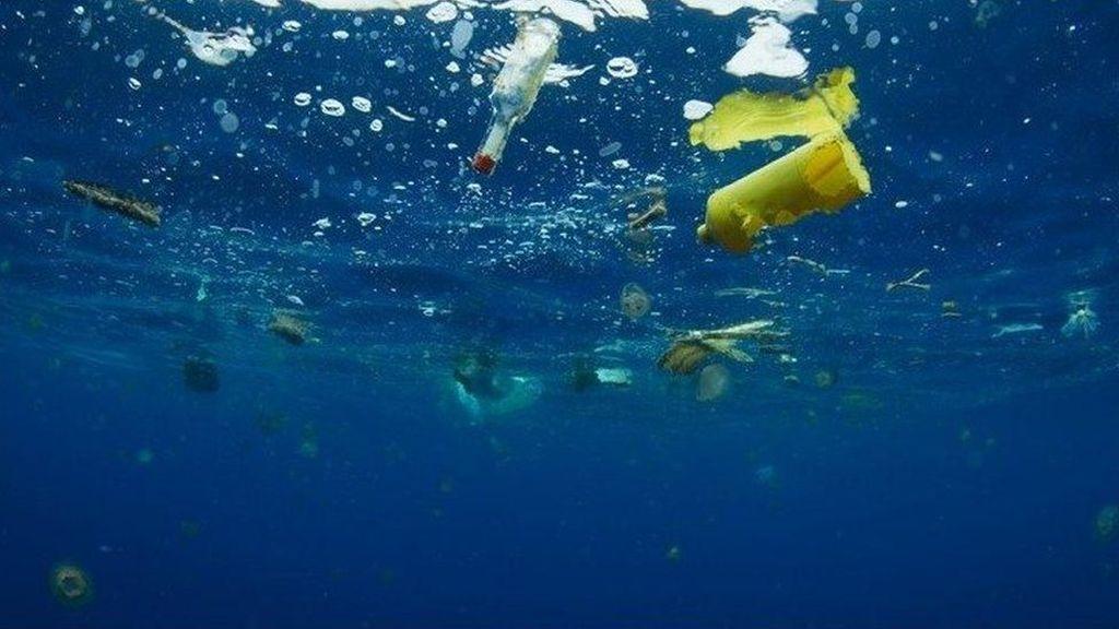 Mengapa Hewan Laut Tak Bisa Berhenti Makan Plastik?