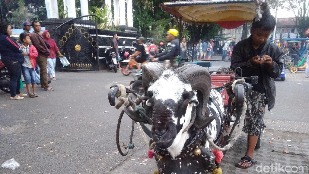 Delman Domba Jadi Primadona Warga Garut Saat Ngabuburit
