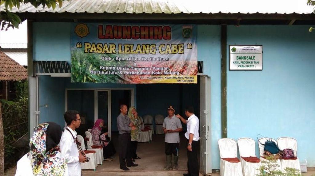 Pertama Kali, Kementan Gelar Pasar Lelang Cabai di Malang