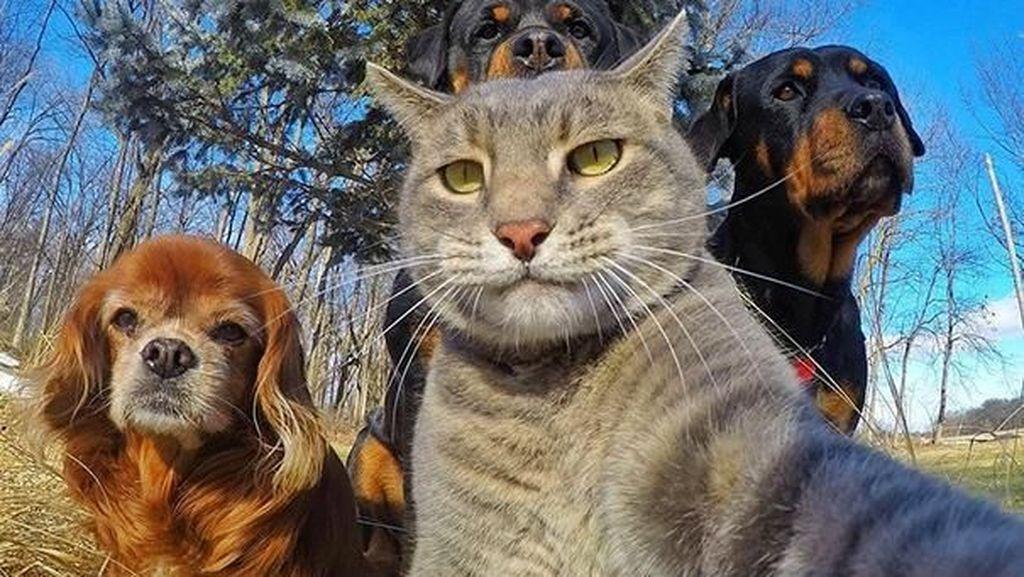Tingkah Menggemaskan Para Hewan yang Asik Berselfie