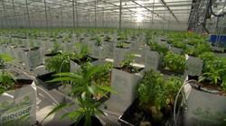 Canopy Growth merupakan perkebunan ganja medis legal yang diklaim terbesar didunia. Yuk intip seperti apa isinya.