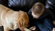 Balita Ini Berhasil Kabur dari Kamar Dibantu Anjing Peliharaan