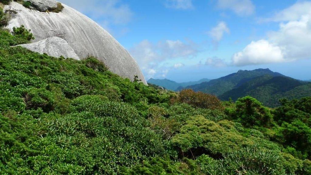 Yakushima, Sebuah Pulau Surga di Jepang