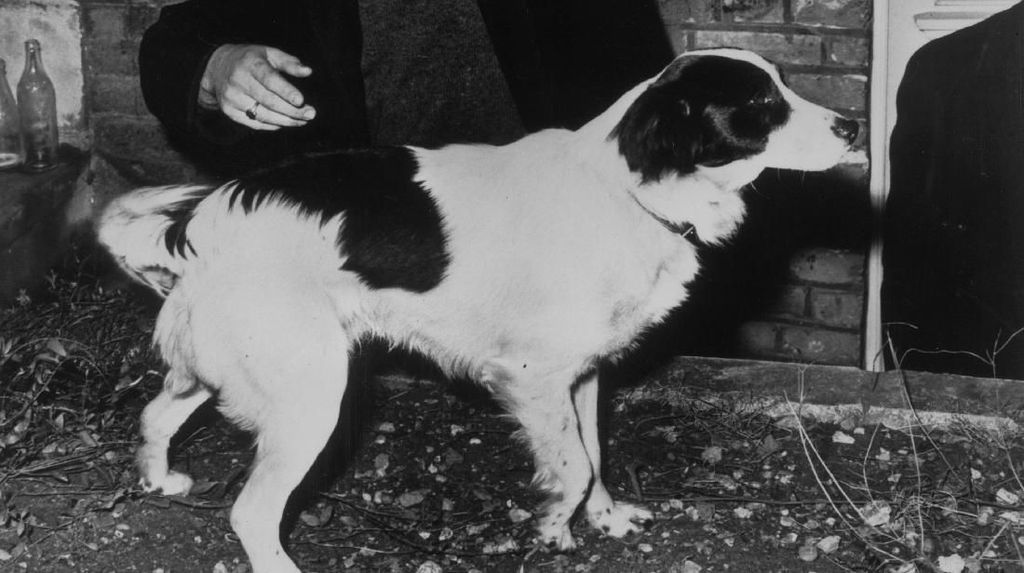 Kisah Pickles, Si Anjing Pahlawan di Piala Dunia 1966