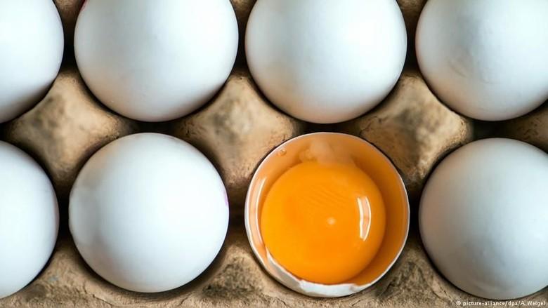 Jerman Temukan Puluhan Ribu Telur Terkontaminasi Insektisida