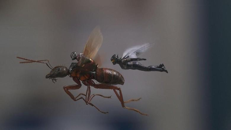 Ini Pemenang Kuis Nobar Ant-Man and The Wasp di Yogyakarta