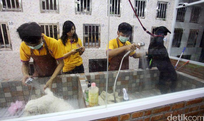 Kemang Pet Hotel & Beauty Clinic merupakan salah satu tempat penitipan hotel yang menjadi pilihan banyak pemilik hewan untuk menitipkan hewan peliharaan selama mudik.