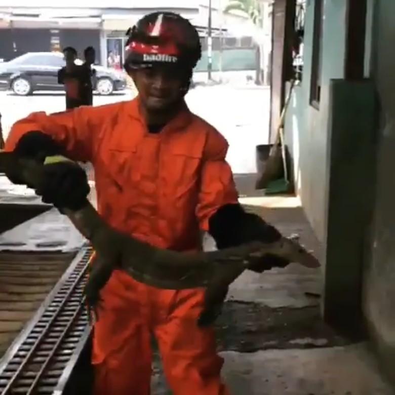 2 Ekor Biawak Ditangkap di Samping Rumah Walkot Jakbar