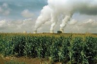 Perubahan Iklim Global Sebabkan Pasokan Sayuran Dunia Turun