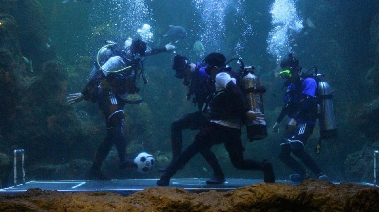 Foto: Atraksi juggling bola dalam air di Seaworld Ancol (dok Ancol)